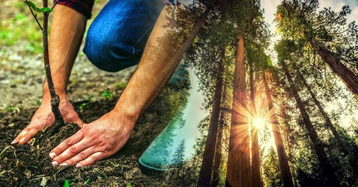 Plantarán mil millones de árboles para luchar contra el cambio climático