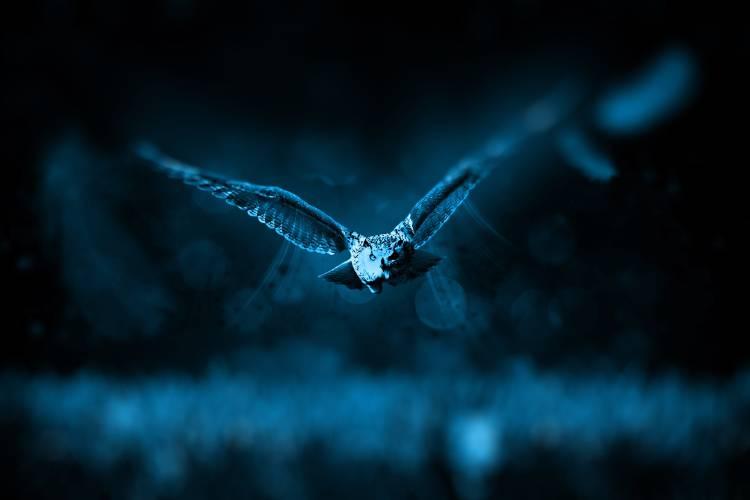 Un búho volando en la noche