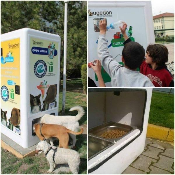 Ideas con corazón: Reciclaje de botellas y comederos para animales callejeros