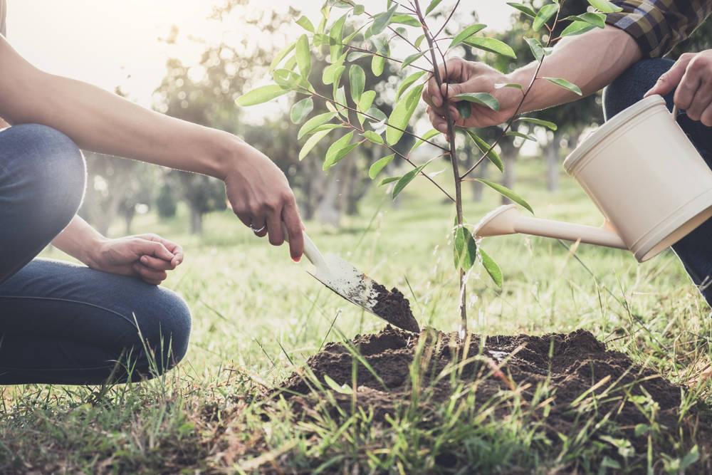Gracias a una campaña de youtubers se plantarán más de 21 millones de árboles