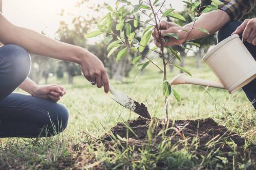 dos personas plantan un arbol sobre la tierra