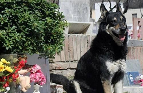 Murió Capitán, el perro más fiel del mundo