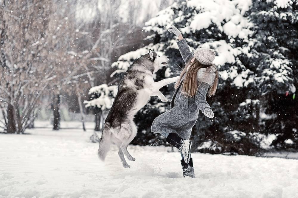 Échame a los lobos y lideraré la manada: una reflexión que cambiará tu per..