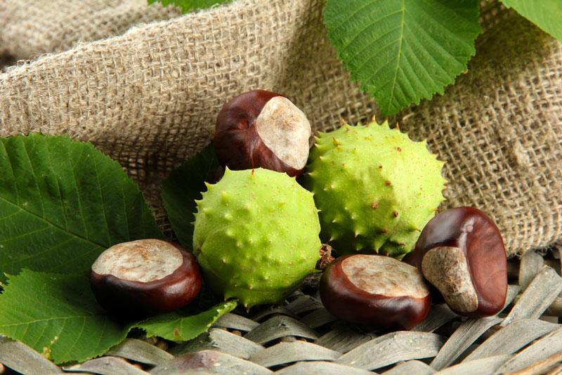 remedios naturales para la mala circulación en la sangre