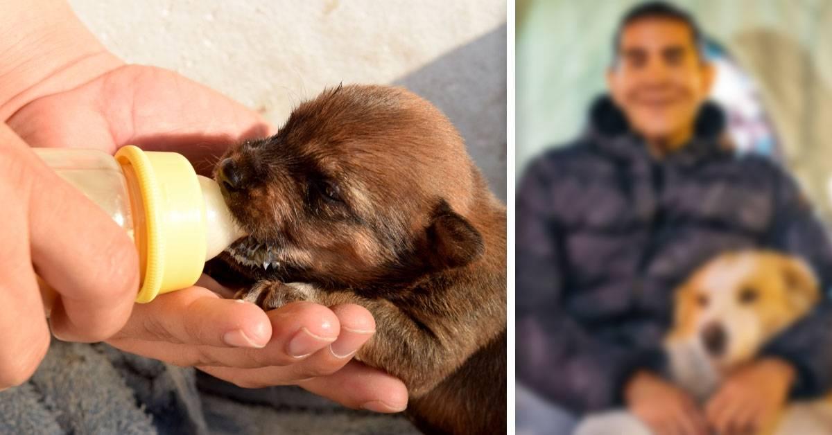 Este exitoso hombre de negocios renunció a todo para salvar perritos abandonados