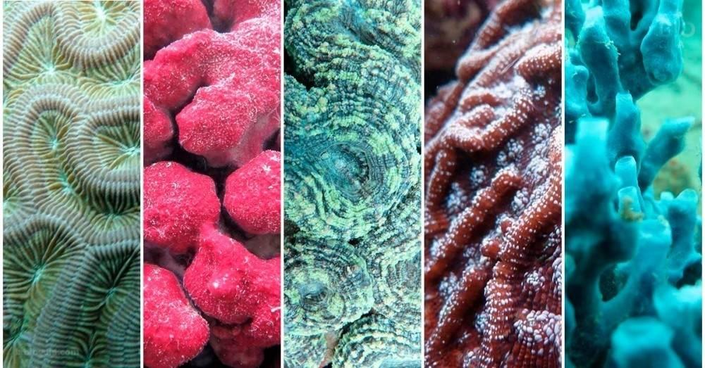 Así de asombrosos se ven los corales y esponjas debajo del agua
