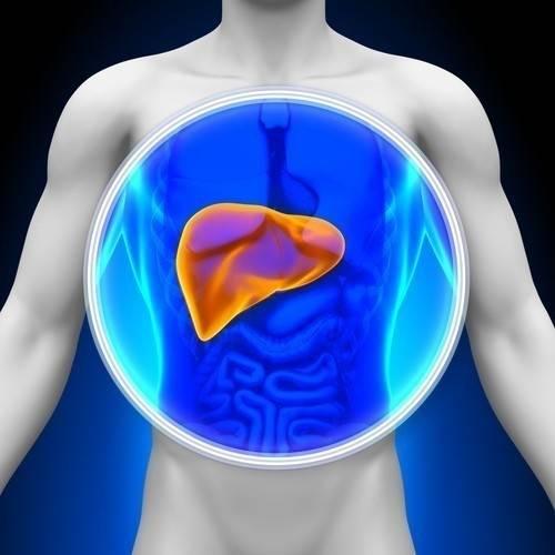 Cómo limpiar el hígado para ayudar a bajar de peso