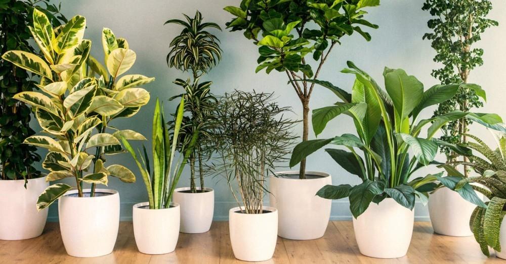 3 plantas que hacen vibrar tu hogar de forma positiva y no for Plantas de interior lidl