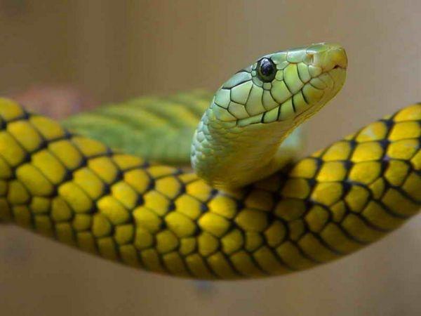 serpiente-cosmica