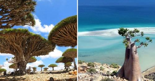 Así es Socotra, la isla de las especies perdidas