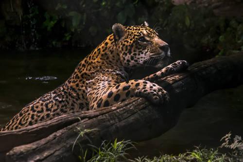 Por qué los depredadores son las especies más importantes