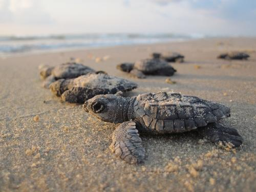 Gerard Butler liberó tortugas marinas en Costa Rica para celebrar sus 50 años