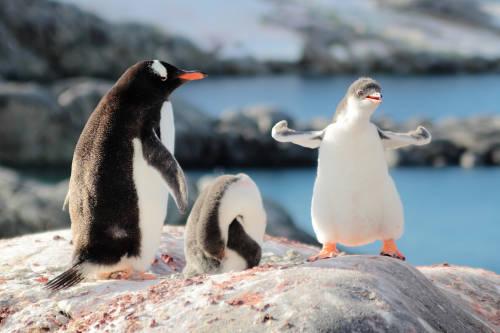 Registran en la Antártida una temperatura récord de 18°C