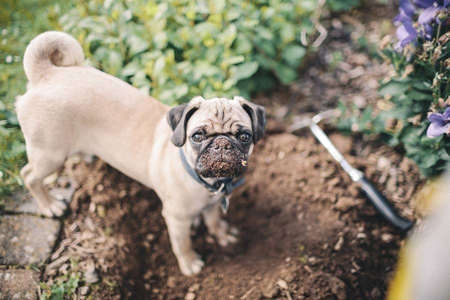 Trucos para evitar que tu mascota arruine tu jardín
