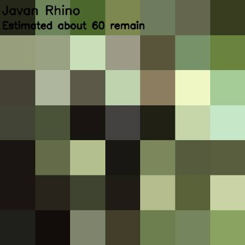 14 - javan rhino 60
