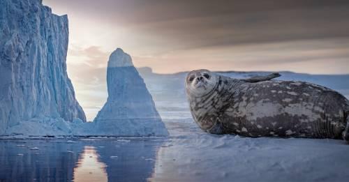 ¿Se acaba el tiempo? Los científicos advierten que la Antártida se derrite más rápido que nunca