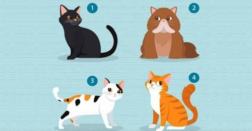 Elige un gato y te diré qué necesitas en una pareja