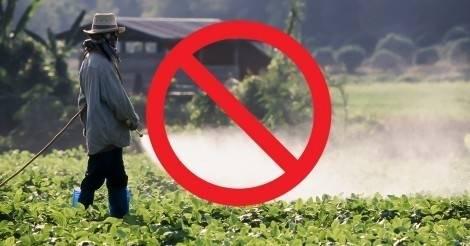 Esto es mejor para tus plantas que todos los plaguicidas y no te imaginas de q..