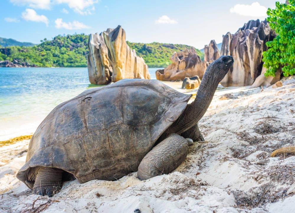 Seychelles limita el turismo para proteger a las tortugas gigantes