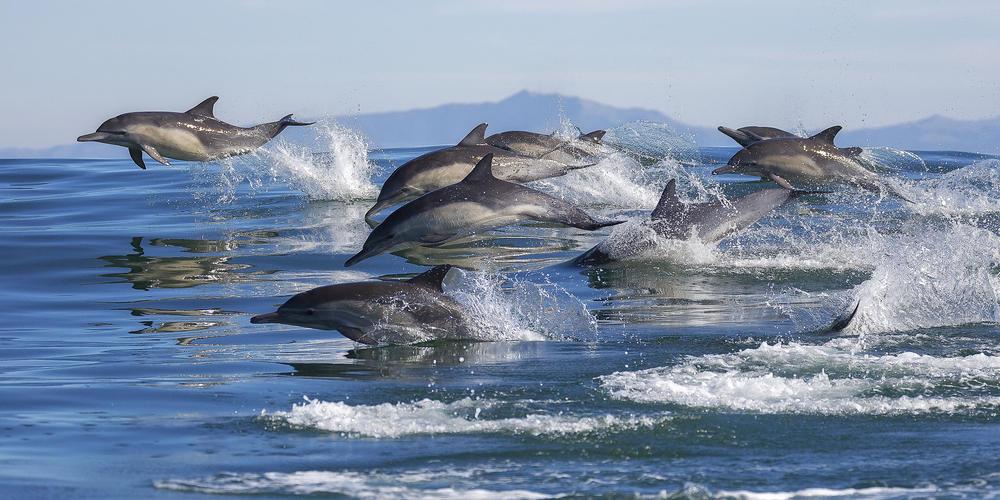 Premios Whitley: los Óscar ambientales que destacan los mejores proyectos