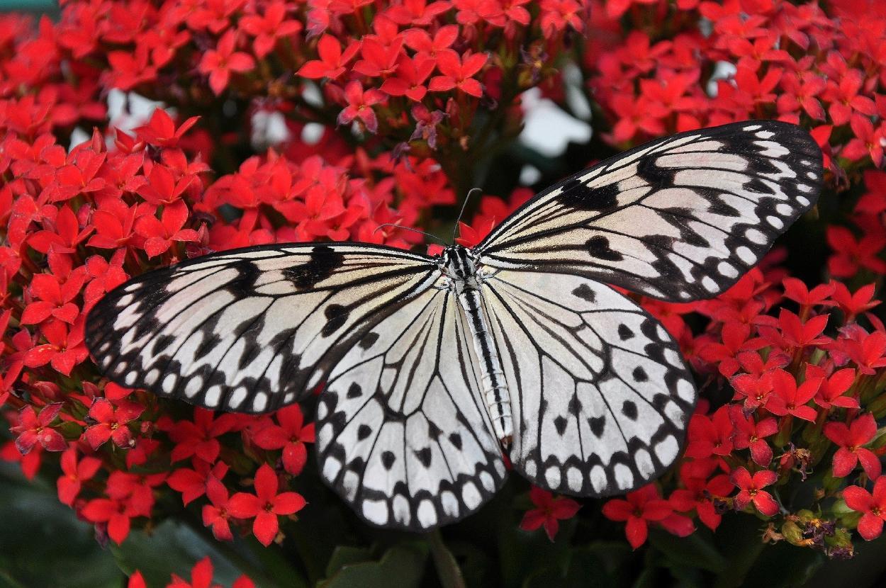 Las alas de las mariposas están perdiendo color por la deforestación