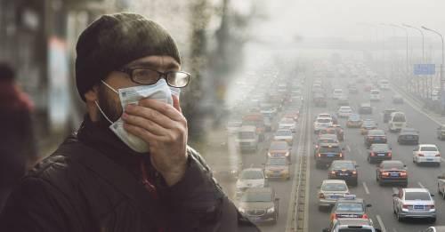 Este insecto puede monitorear la contaminación en las ciudades