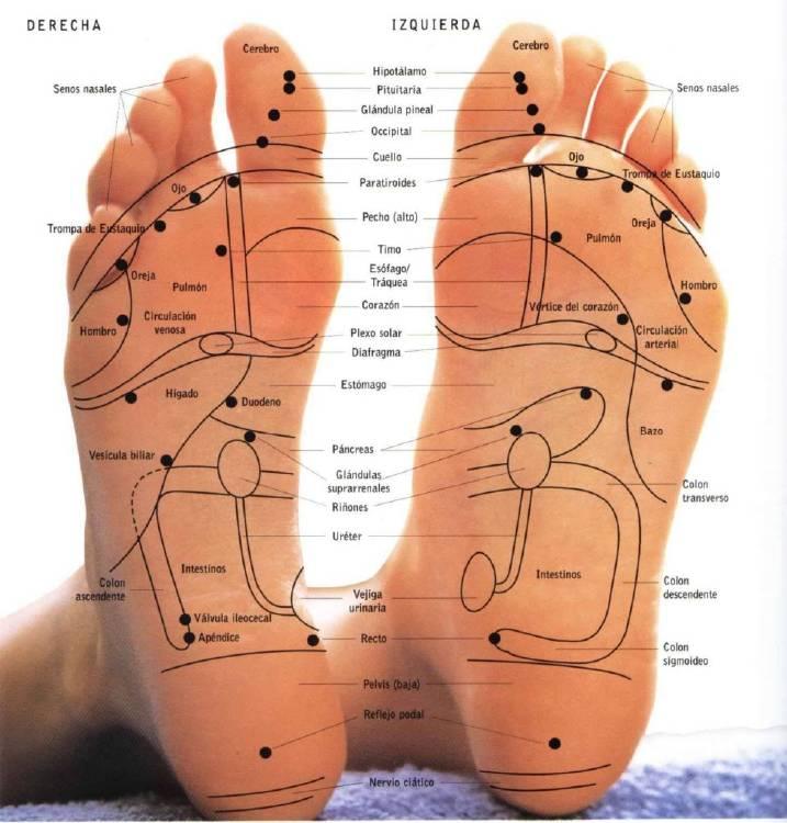Zonas reflejas del pie