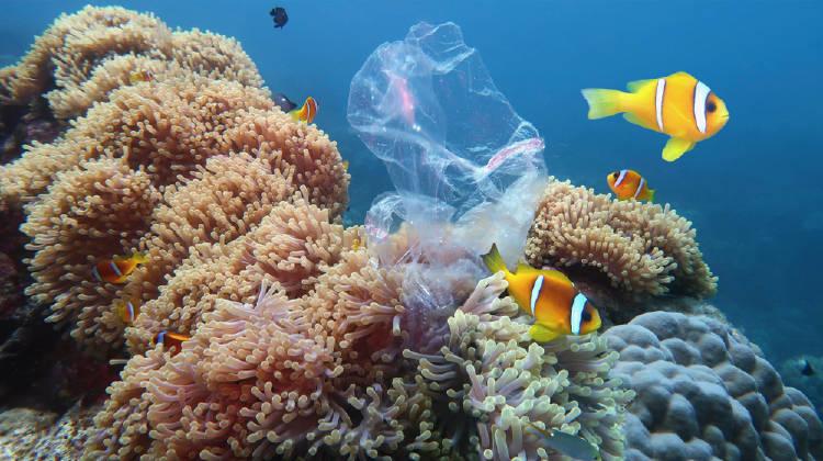 corales peces mar oceano plastico