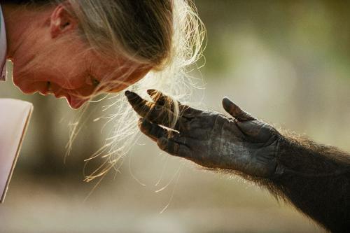 Jane Goodall: 3 desafíos a superar para abordar el cambio climático
