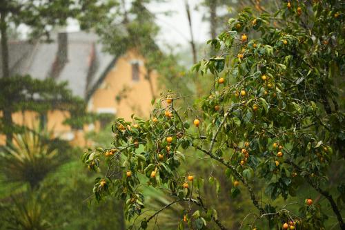 Copenhague se llenará de árboles frutales para sus habitantes
