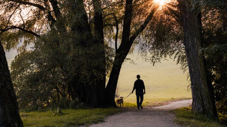 persona paseando a un perro en un parque
