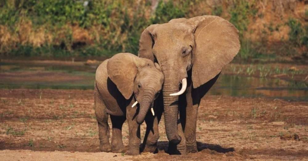 La crueldad no tiene fin: esto le estamos haciendo a los elefantes