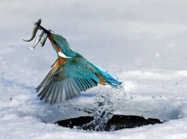 Perfectly-Timed-Animal-Photos-8