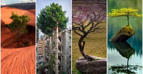 15 árboles que nos enseñan grandes lecciones de vida