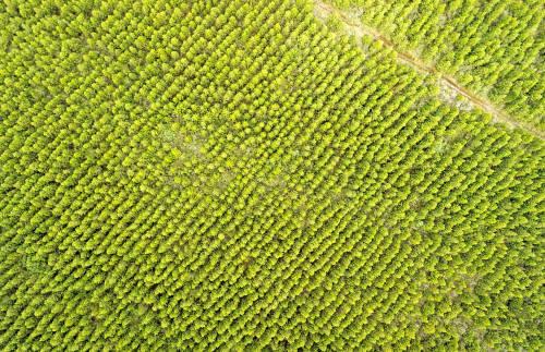 Plantar un billón de árboles no va a frenar el cambio climático