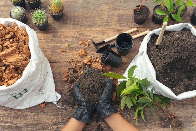 closeup-picture-of-gardener-s-hands-planting-plant.jpg