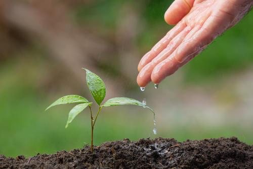 En Brasil sembrarán un árbol por cada una de las víctimas del COVID-19