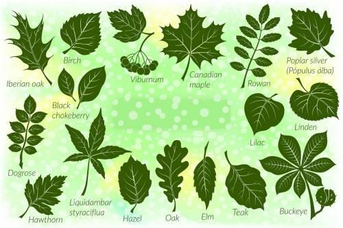 Éstos son los árboles ideales para plantar en la acera