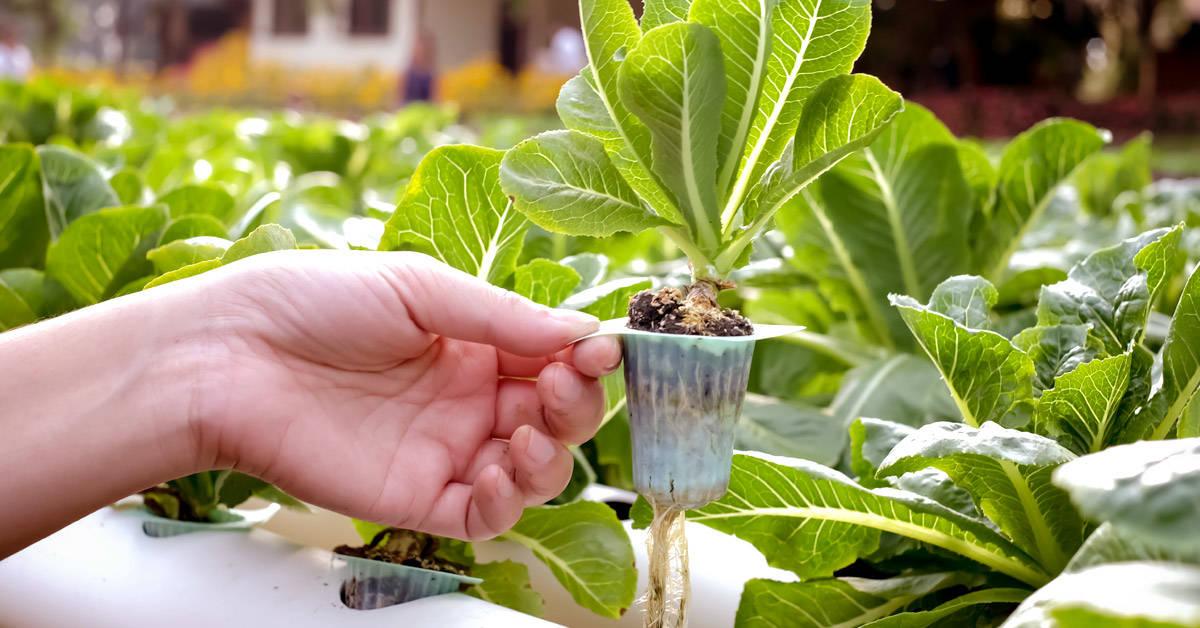 Los beneficios de la agroecología en la huerta