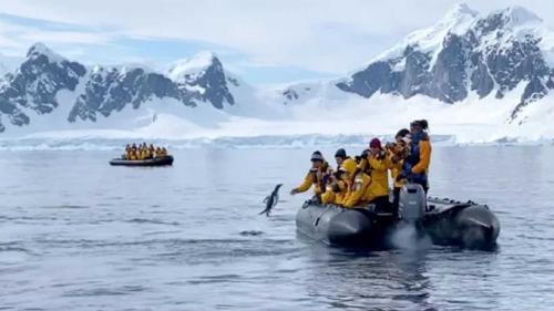 Pingüino saltó a un bote para salvarse de ser cenado por ballenas asesinas