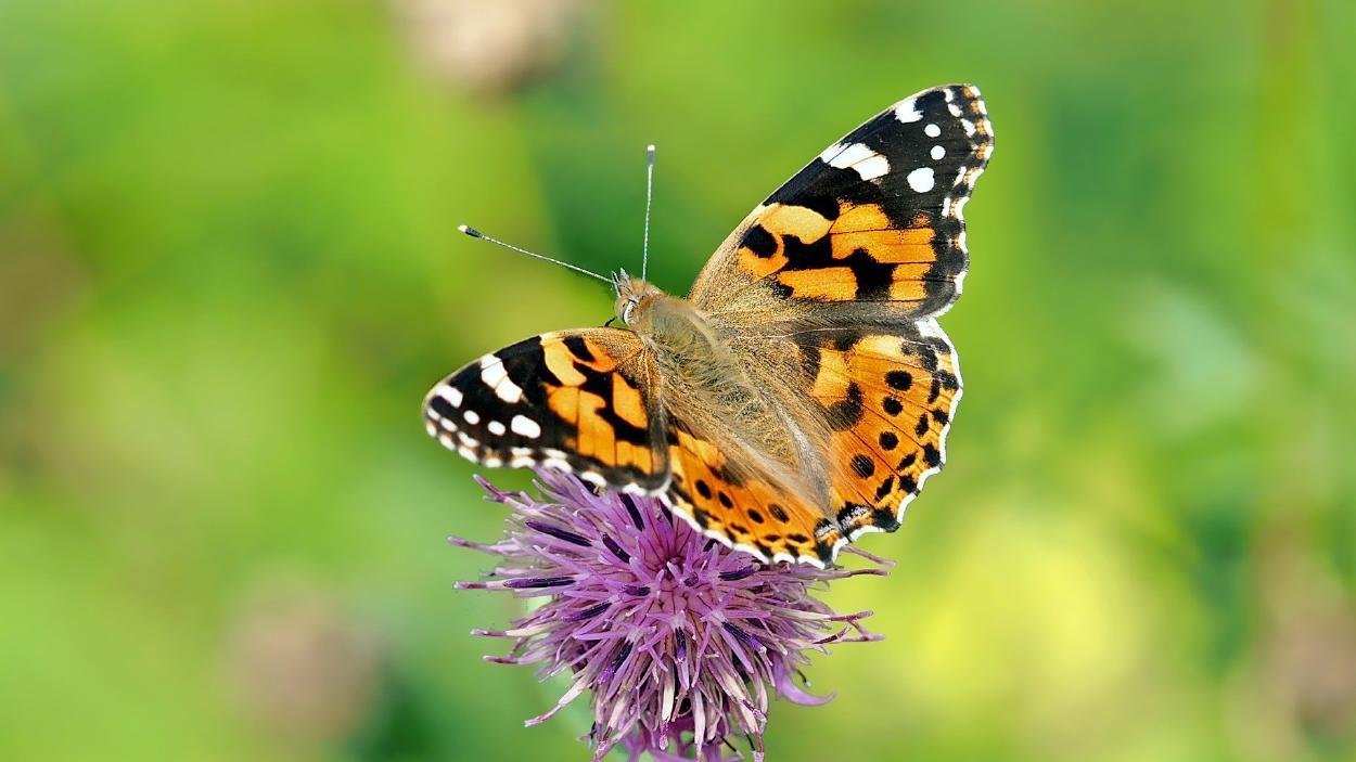 Así es como puedes atraer más mariposas a tu jardín