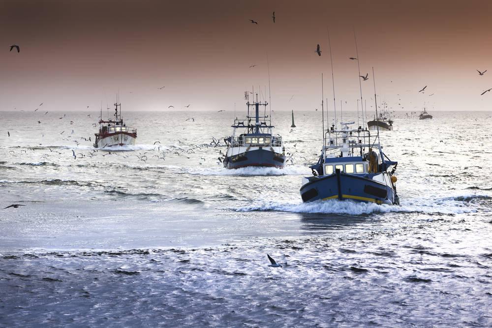 Viajaron al fondo del mar y se encontraron con los efectos de la sobrepesca