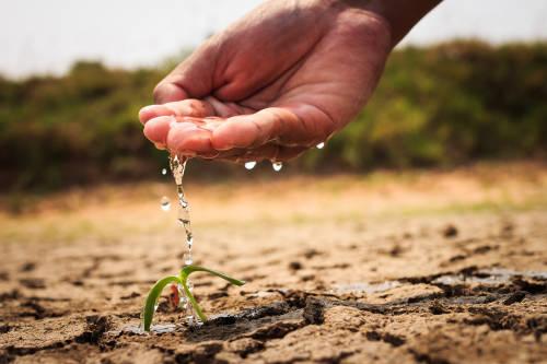 Riega planta en tierra seca