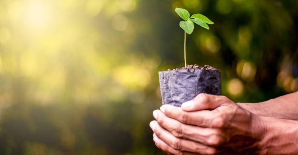 Conoce qué puede pasar en el mundo si cada uno de nosotros planta un árbol