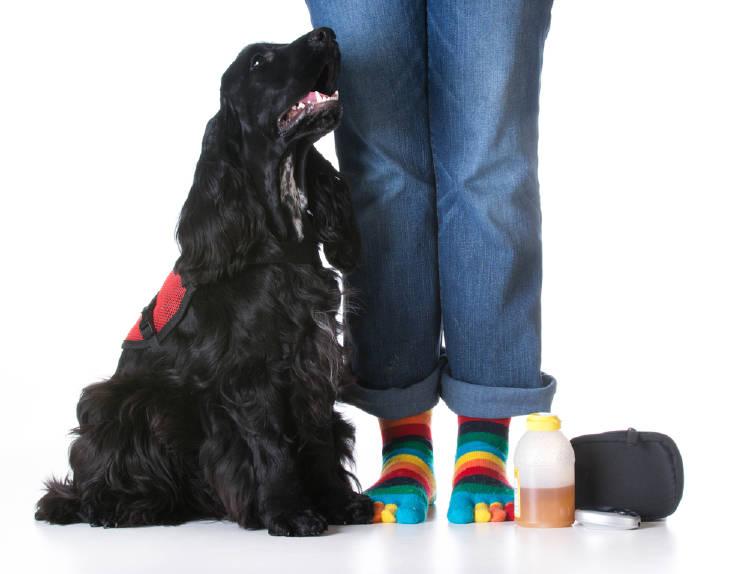 perro de servicio