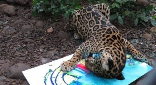 Carubanda, la jaguar que pinta para reducir el estrés y va a las subastas