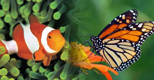 5 especies del reino animal que pueden cambiar de género a voluntad