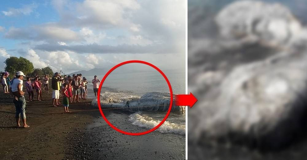 Un misterioso animal aparece en la playa y ahora los lugareños temen que se a..