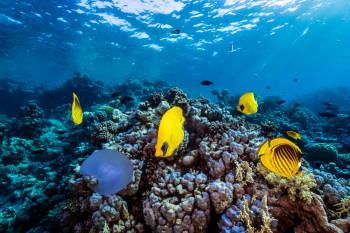 peces mar oceano