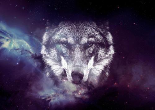 Descubre cuál es tu animal espiritual según tu fecha de nacimiento